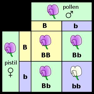 mendel flowers