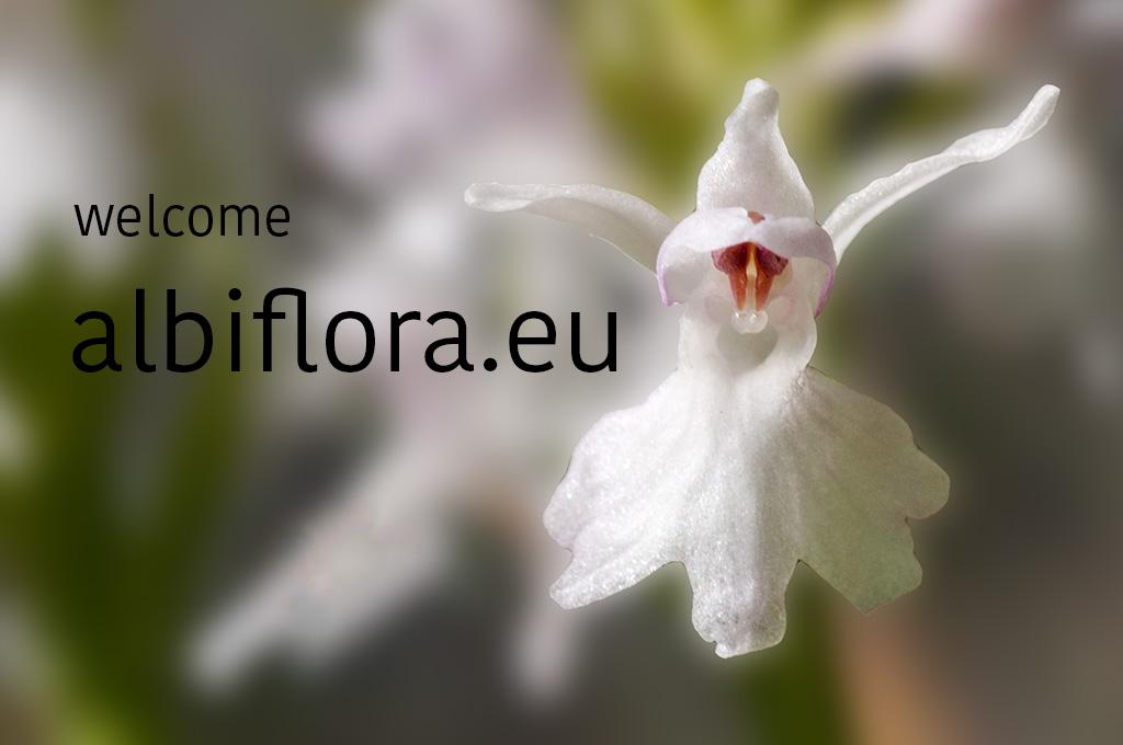 welcome at albiflora.eu